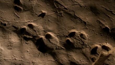 Ősorrszarú lábnyoma (Forrás: Novohrad - Nógrád Geopark)