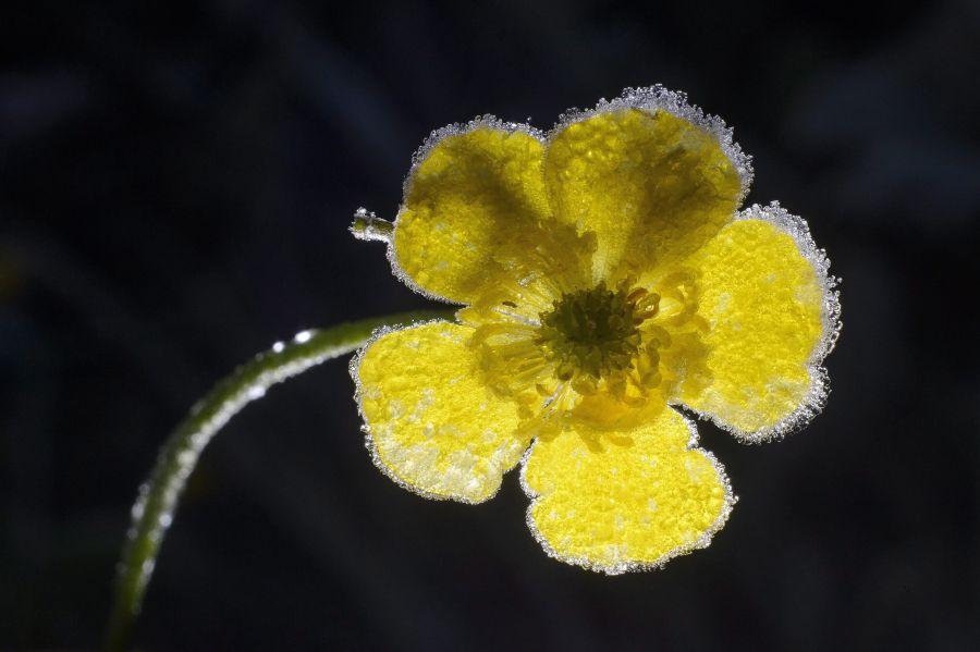 Kiemelt archív fotó: Virágon megfagyott dér Zabar közelében (MTI Fotó: Komka Péter)