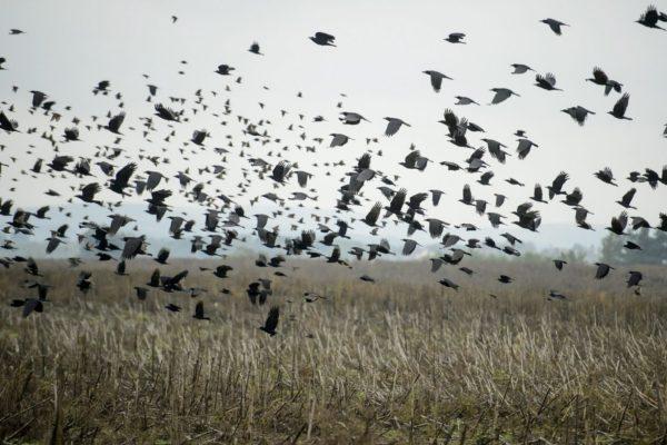 Árverésre bocsátott termőföld Szécsény határában (MTI Fotó: Komka Péter)