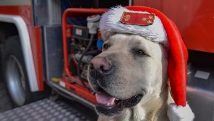 Brúnó százados (Fotó: Juhász Jácint c. tűzoltó törzszászlós | Salgótarjáni HTP | Nógrád Megyei Katasztrófavédelmi Igazgatóság)