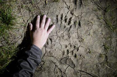 Archív fotó: Egy európai barnamedve (Ursus arctos arctos) lábnyomát örökítették meg 2014. októberben Etes közelében (MTI Fotó: Komka Péter)