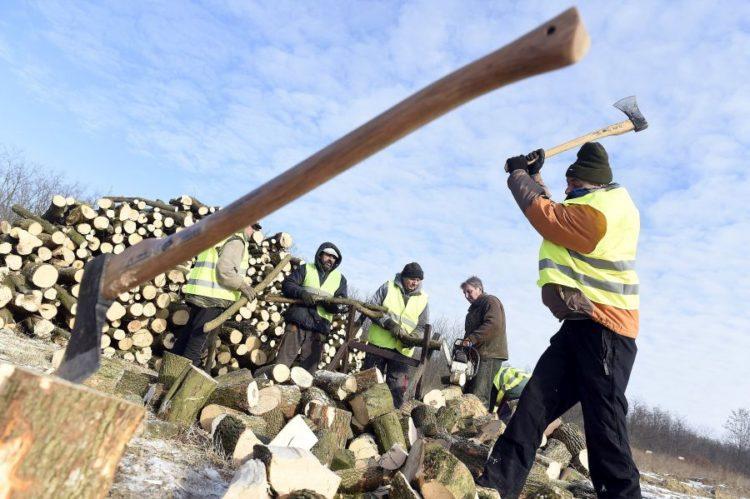 Több önkormányzatnál is a helyi közmunkások aprítják fel a Belügyminisztérium által meghirdetett tüzelőanyag-pályázat keretében elnyert támogatásból vásárolt tűzifát (MTI Fotó: Kovács Tamás)
