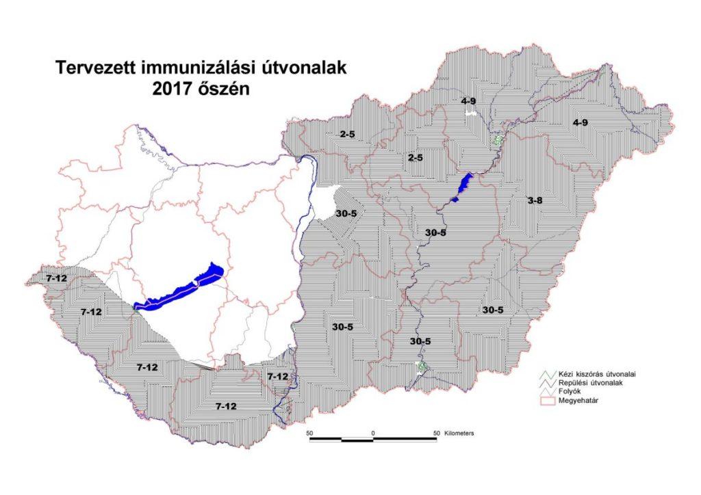 A 2017 őszi vakcinázás ütemterve és területi érintettsége (Forrás: Nemzeti Élelmiszerlánc-biztonsági Hivatal)