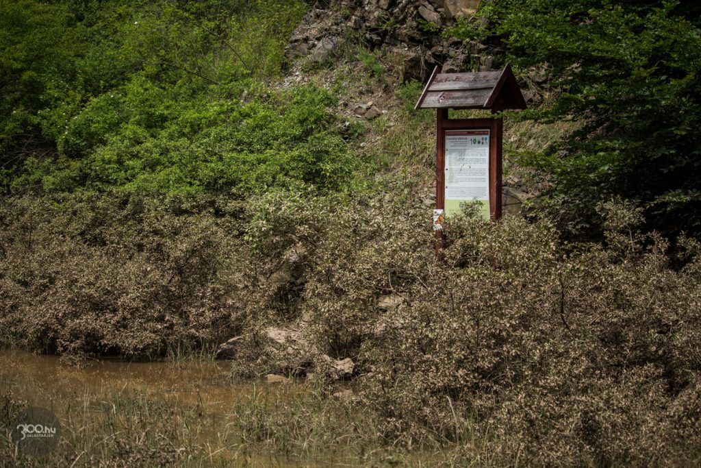 3100.hu Fotó: A legmagasabb vízszint a növényekre száradt sárról jól láthatóan valahol a rézsűre állított információs tábla alsó harmadában volt