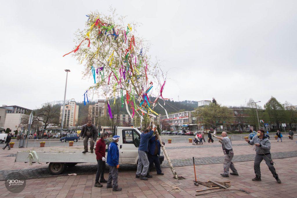 3100.hu Fotó: Májusfát állítottak a salgótarjáni Fő téren