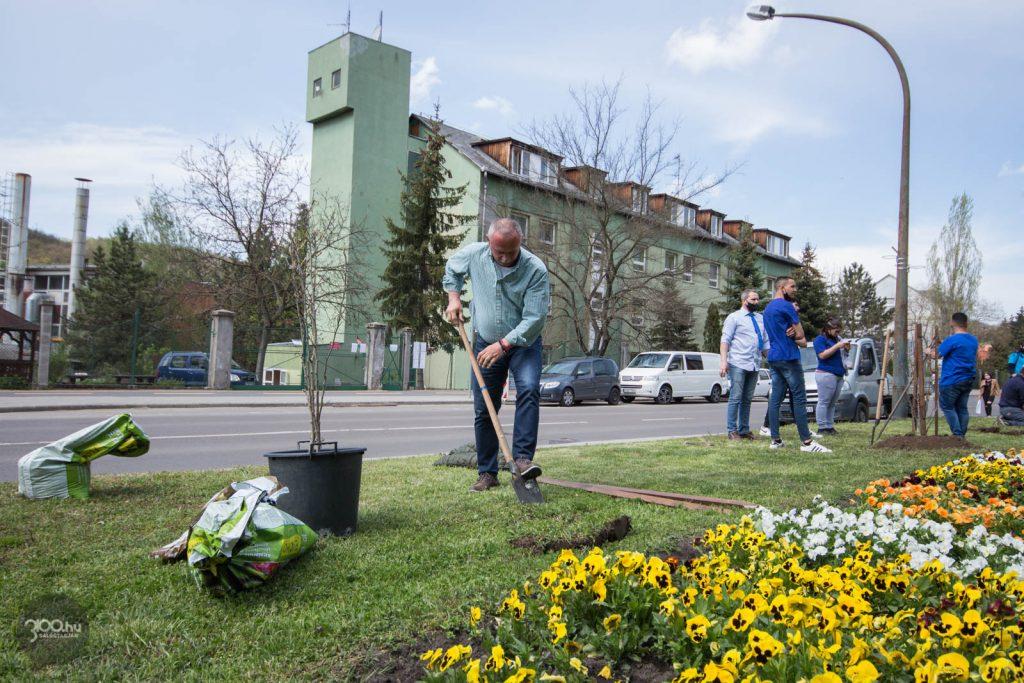 3100.hu Fotó: Fekete Zsolt polgármester a Báthory téri faültetésen
